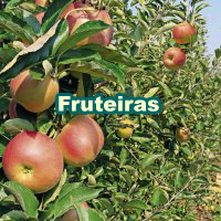 Fruit_Trees_200x200_pt