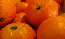 CitrusClementina_250x150